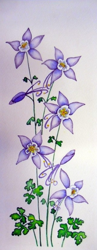 Original watercolor painting Columbine flower Fraser, Colorado art 420 love