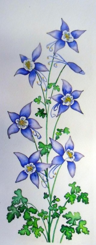 Original Columbine watercolor painting Winter Park, Colorado local artwork and subject matter fine art flowers