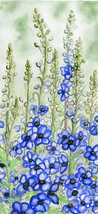 Delphinium watercolor painting