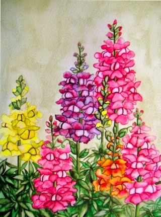 snapdragon watercolor painting original artwork fraser art gallery ski garden ski art