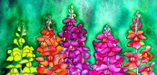 Snapdragon antirrhinum flower art snapdragon painting watercolor painting Elizabeth Kurtak Art Gallery Fraser Colorado
