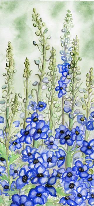 Delphinium watercolor painting