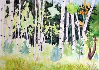 Aspen Plein Air Watercolor painting Experimental Forest St Louis Creek Fraser, Colorado Art Gallery Alpine Art Affair print local artist
