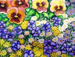 pansies violas bidens spainish daisies asters