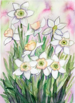 daffodill stargazer